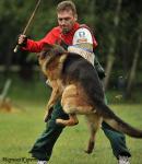 Дрессировка собак  Видное Домодедово Подольск Москва