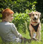 Знакомьтесь, это Рой! Самый трогательный пёс на свете! А Вы знаете, почему у Роя шерсть золотистого