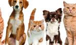 Вызывная вветеринарная служба в Москве и Питере