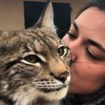 Продам котят Канадской рыси и Европейской рыси