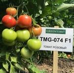 Семена томата TMG-074 F1