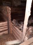 Свинина фермерская