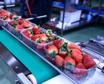 Укладчик-упаковщик на пищевое производство